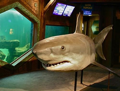 aquarium-imperator
