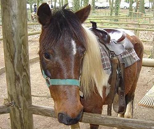 indian-poney-ranch